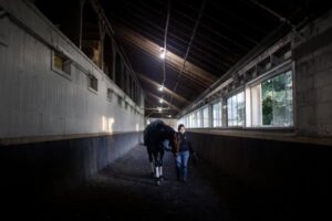 At Belmont's Backstretch, Caring for Horses During the Shutdown
