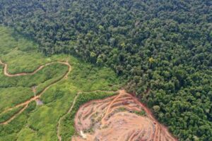 'Going in the Wrong Direction': More Tropical Forest Loss in 2019