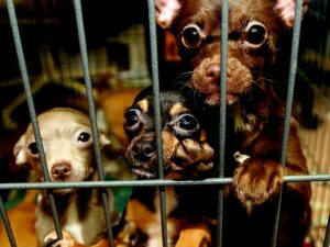 Legal loophole in puppy mill ordinance closed by aldermen