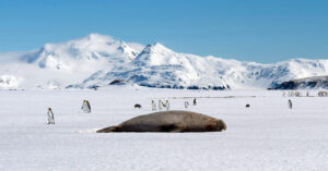 How 14 Elephant Seals Assisted an Antarctic Ice Study