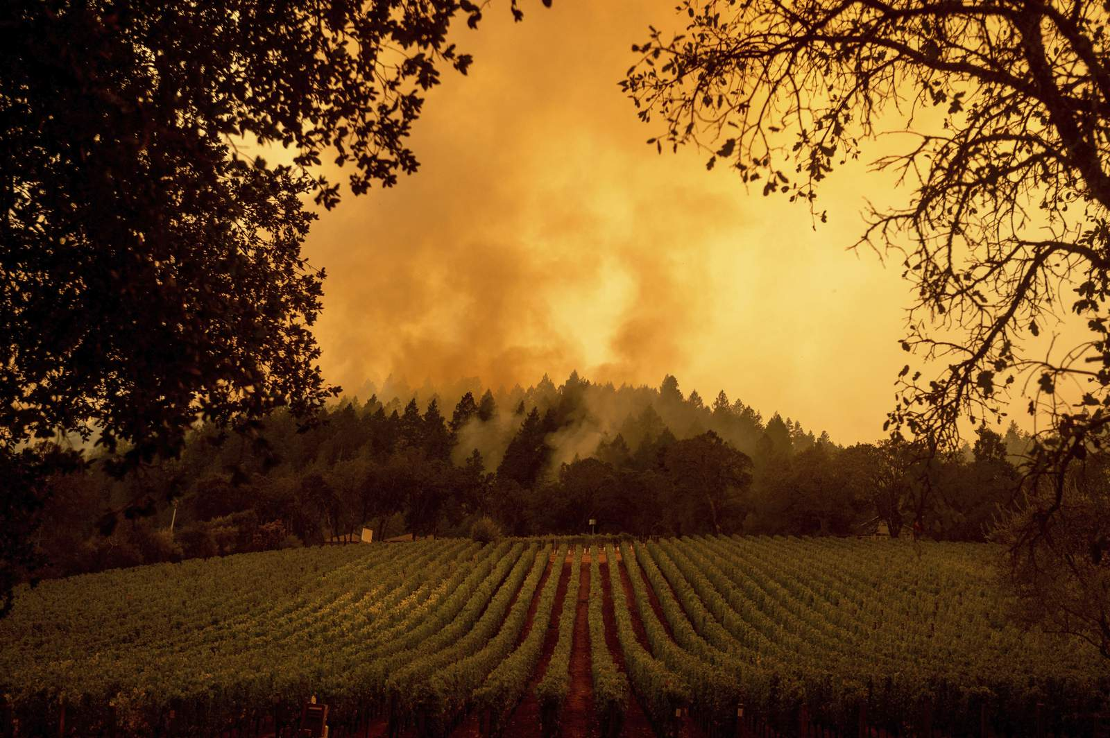 California's wine country residents facing fire fatigue