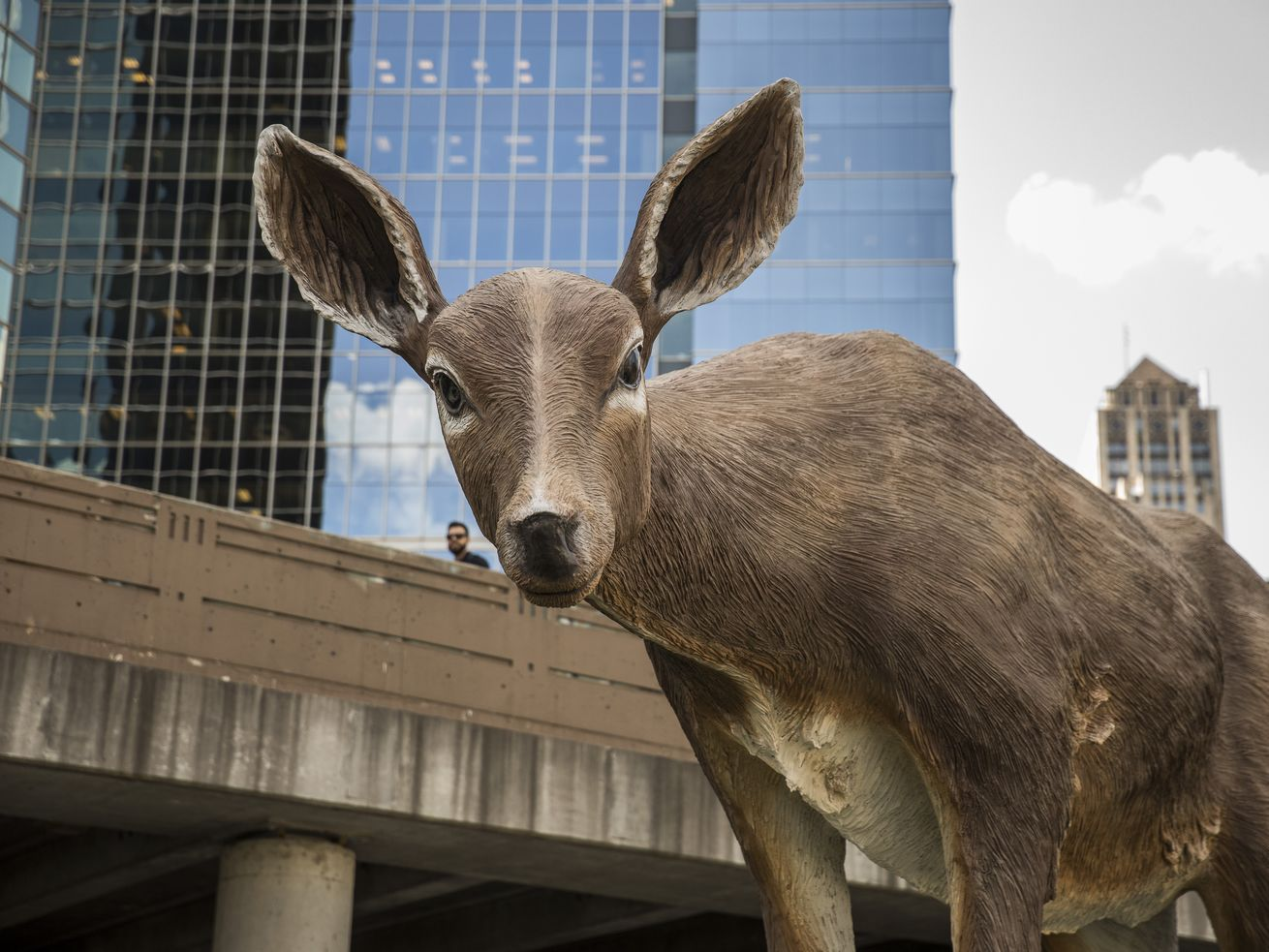 Mating season means more deer in the headlights, officials warn