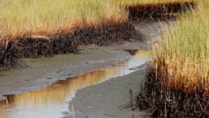 $215M in BP oil spill money to restore Louisiana marshes