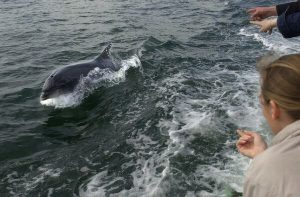 Fungie, Ireland's Missing Dolphin, 'Goes With the Tide'
