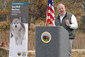 U.S. to Remove Wolves From Protected Species List
