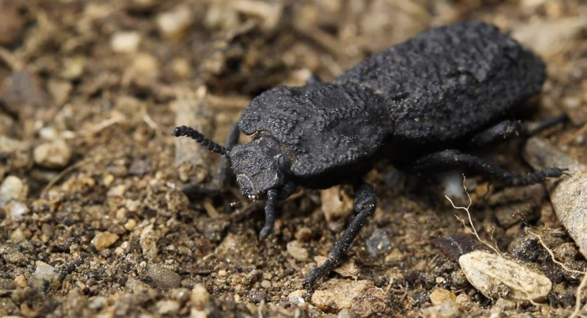 Can't crush this: Beetle armor gives clues to tougher planes