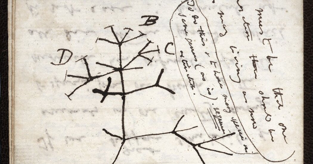 Two Darwin Notebooks, Missing for Decades, Were Most Likely Stolen