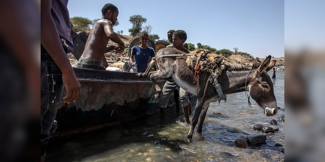 Tigray refugees who fled the conflict in the Ethiopia's Tigray arrive with their donkey on the banks of the Tekeze River on the Sudan-Ethiopia border, in Hamdayet, eastern Sudan. (AP Photo/Nariman El-Mofty)