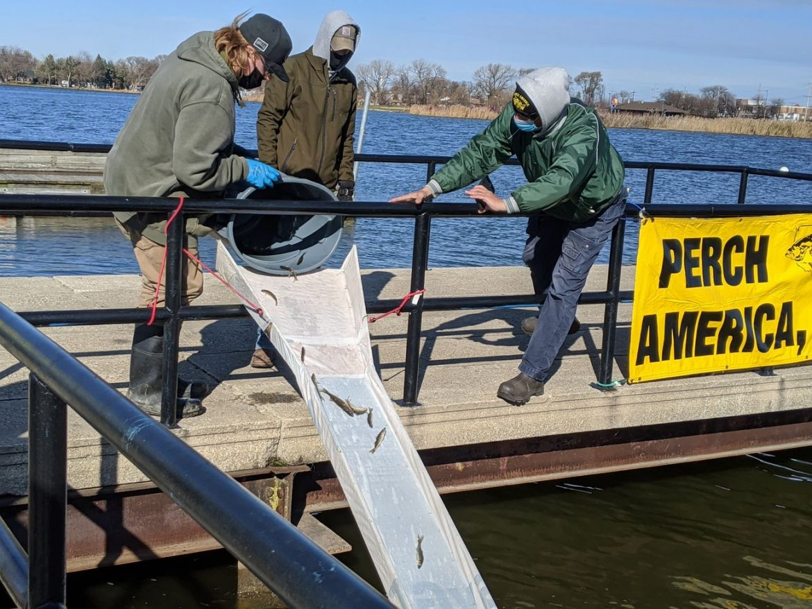 Walleye stocked in Wolf Lake: Great citizens' effort reaches its 22nd year
