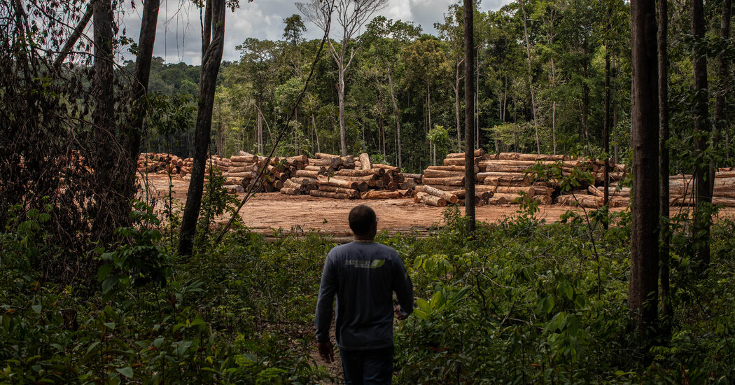 Former U.S. Climate Leaders Press Biden on Amazon Deforestation