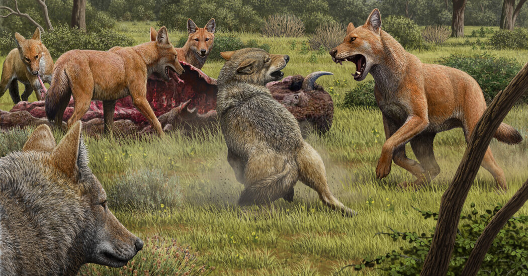 The Real Dire Wolf Ran Into an Evolutionary Dead End