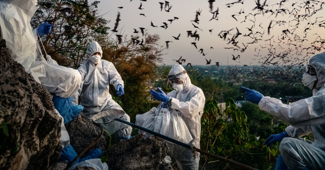 Thai Caves Attract Millions of Bats — and Now Scientists Too