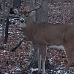 Chicago outdoors: Fish out of water, shedding bucks, Jack Ehresman, Abu Garcia