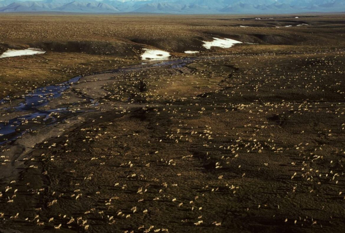 Biden plans temporary halt of oil activity in Arctic refuge