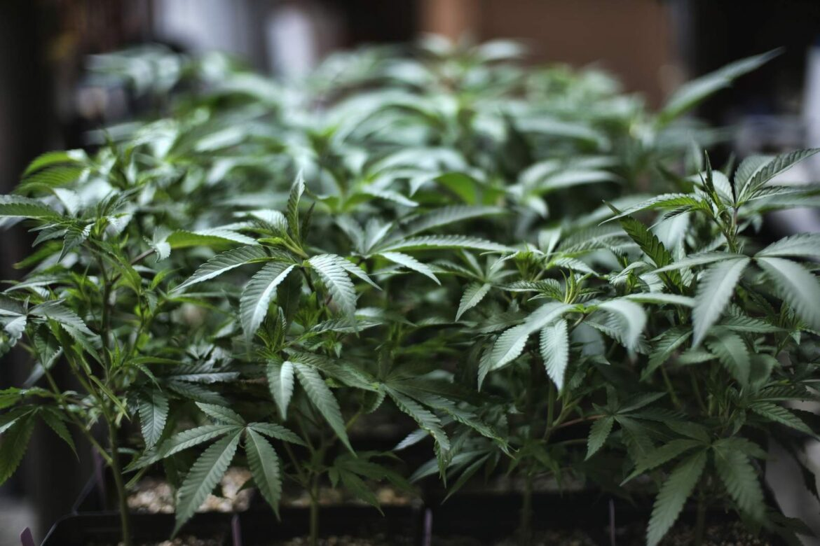 Arizona, 15th state with legal pot, sees recreational sales
