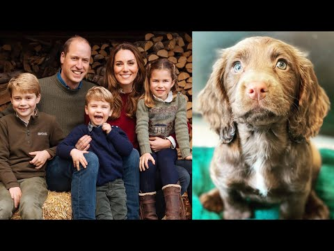 Kate Middleton & Prince William Get a New Puppy
