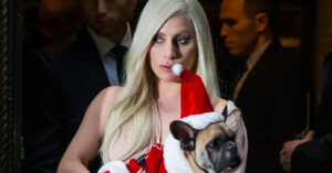 Lady Gaga's Dogs Are Stolen and Dog Walker Is Shot