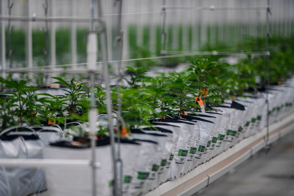 Tilray stock surges for second day after UK cannabis deal