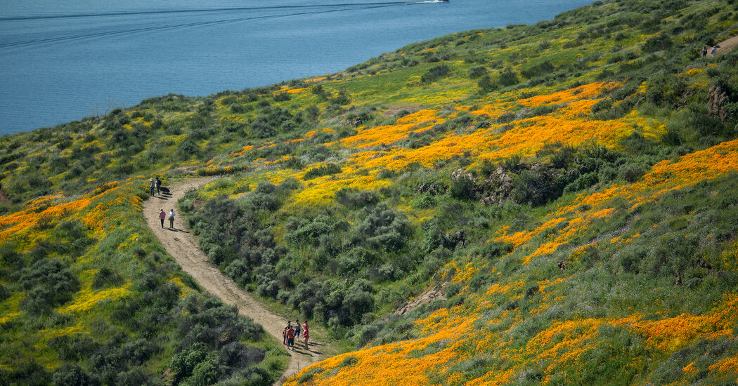 How to Catch This Year's California Blooms