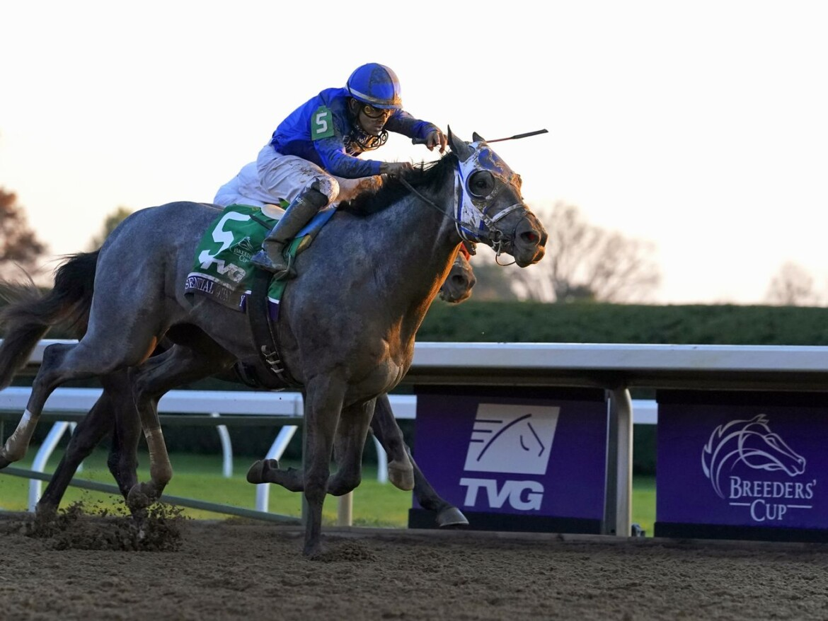 Essential Quality is Kentucky Derby favorite at 2-1