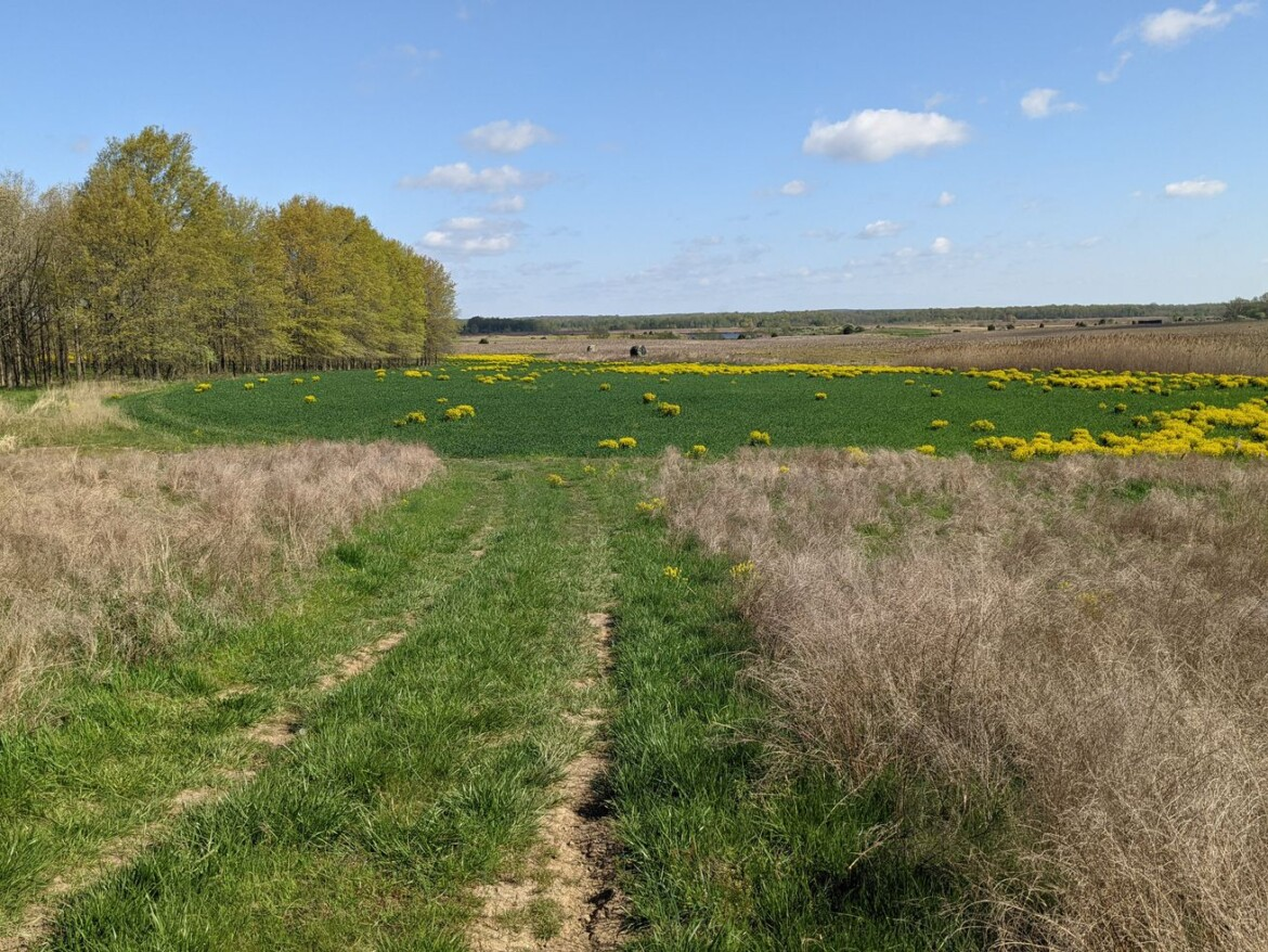Really big conservation easement: Quail Forever takes over a 5,600-acre easement in southern Illinois