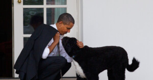Bo, the Obamas' Portuguese Water Dog, Dies