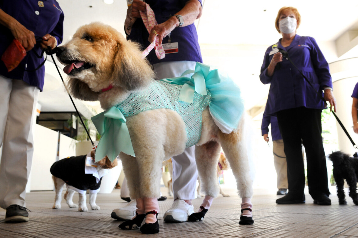 """""""Dogtors"""" return to provide pet therapy at Dignity Health – Northridge Hospital Medical Center"""