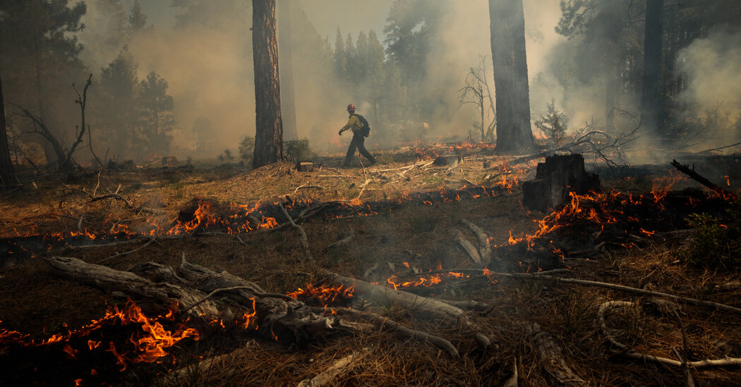 The Meaning and History of a Controlled Burn