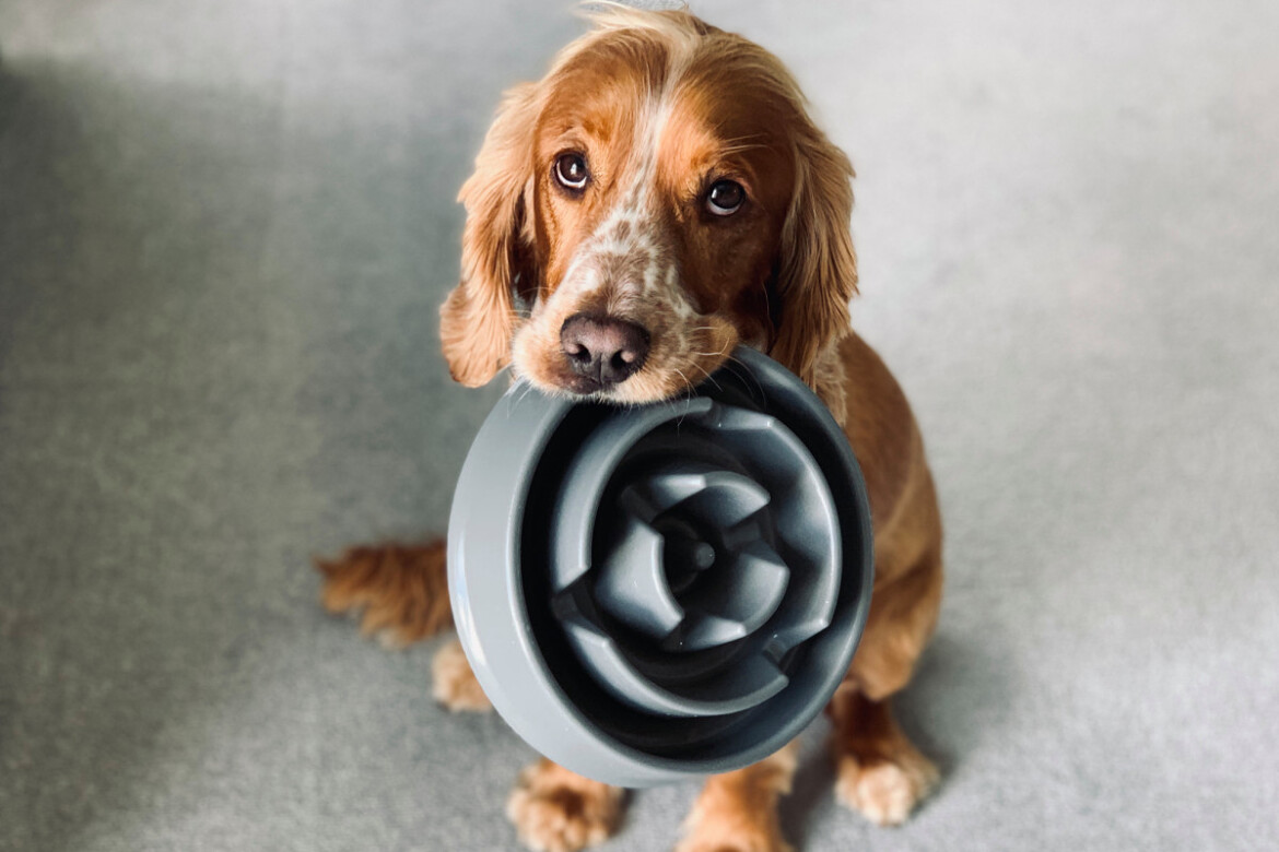 Purina quietly discontinues its 48-year-old Mighty Dog brand