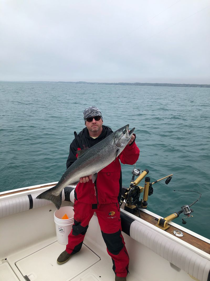 One of the big Chinook caught recently out of Indiana on southern Lake Michigan. Photo provided by Capt. Rich Sleziak