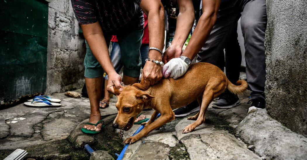 U.S. to Ban Dogs From Over 100 Countries Amid Concern Over Spread of Rabies