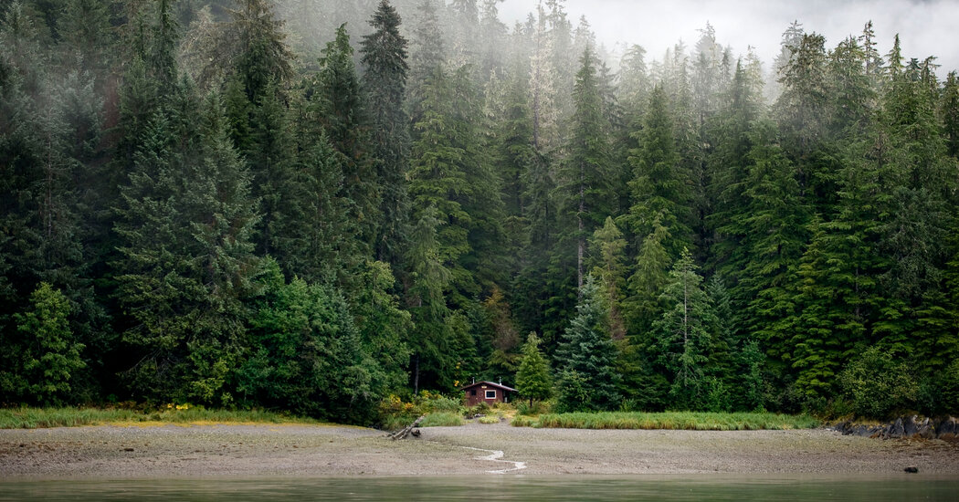 Biden Plans to Restore Tongass National Forest Protections