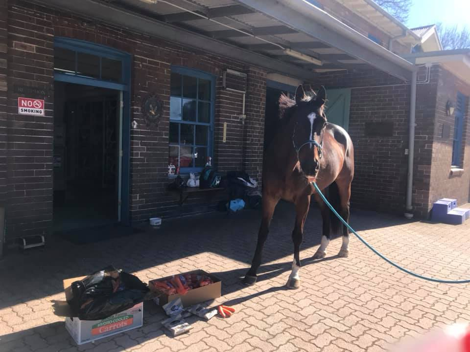 Australian man accused of punching police horse at COVID protest refuses virus test