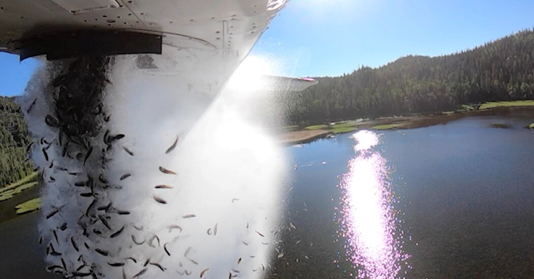 A Plane in Utah Lets the Fish Fly