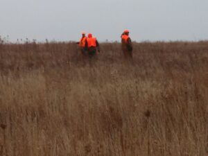 Upland game permits: Tips/thoughts for Illinois' royalty-for-a-day program; plus the Stray Cast
