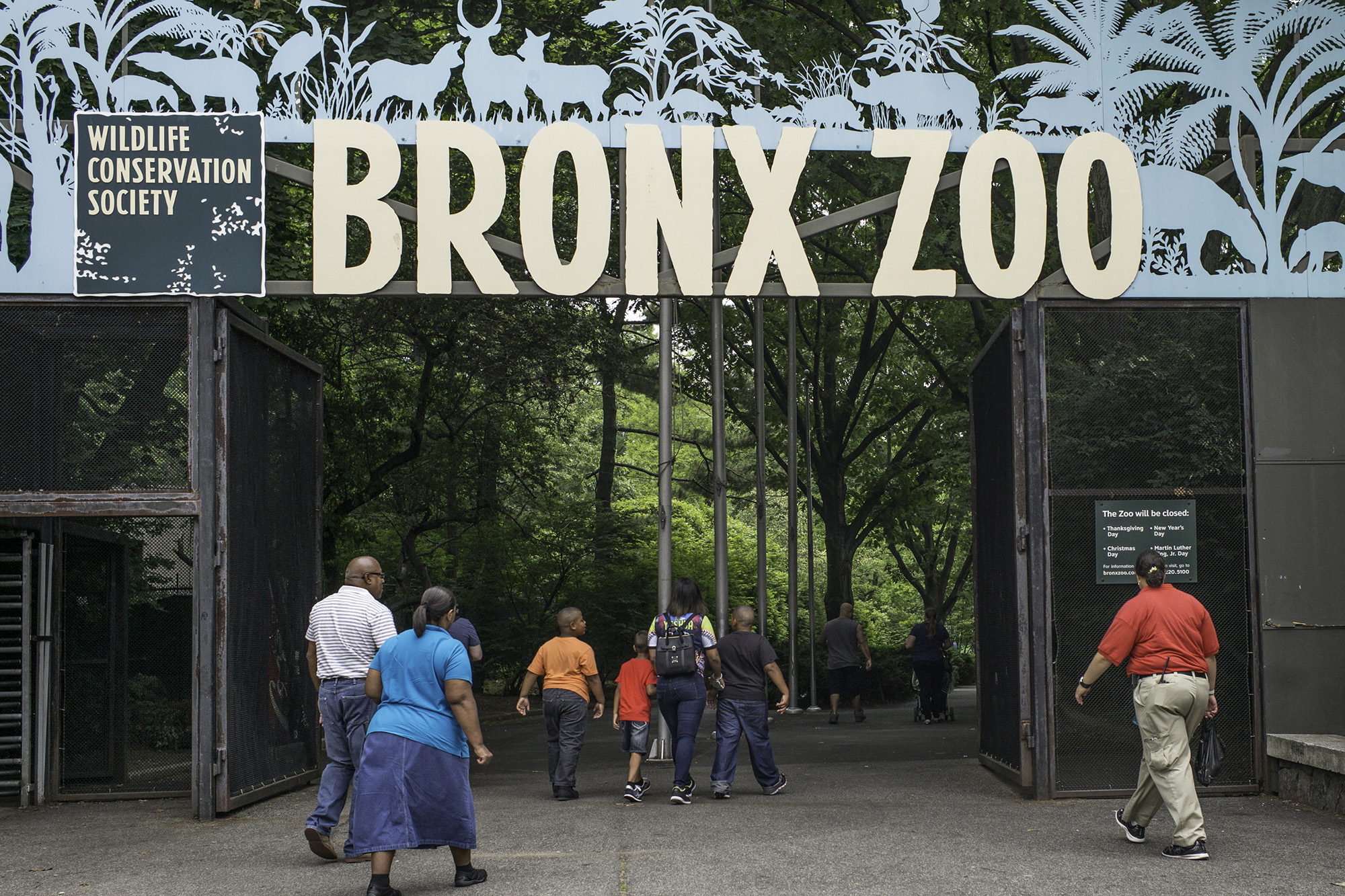 The Bronx Zoo gorillas have been observed adopting a 69 position before.